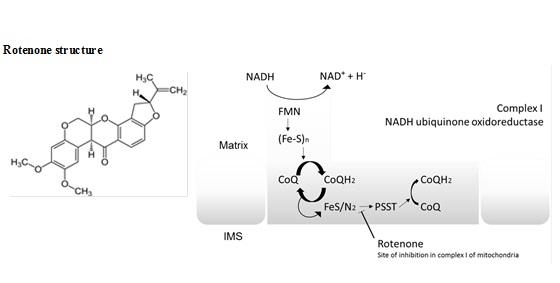 Αποτέλεσμα εικόνας για Mitochondrial NADH:ubiquinone oxidoreductase (complex I)